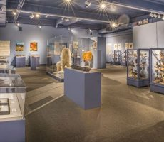 roger-williams-museum-lopco-contracting-004