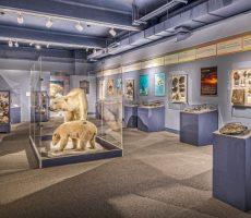 roger-williams-museum-lopco-contracting-006